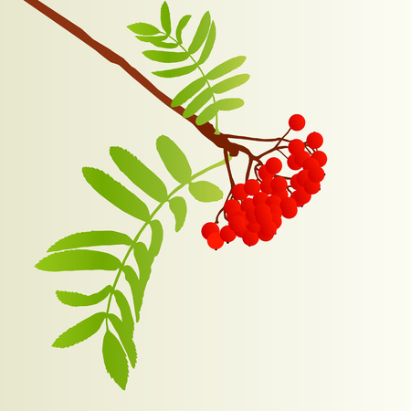 Rowan berries tree branch with leaves autumn vector background vintage illustration Illustration