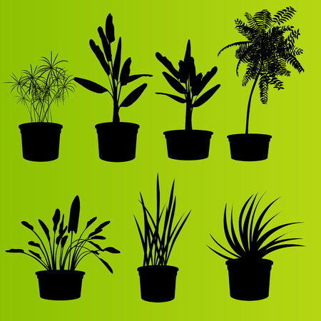 flower pots: House plants in flower pots set isolated vector background Illustration