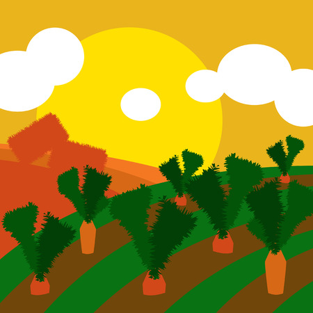 cultivated: Countryside illustration background with cultivated land fields and fresh carrots crop Illustration