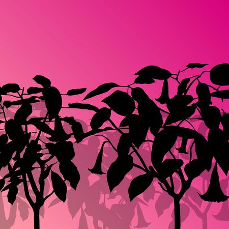 Datura flower or angels trumpet- Brugmansia suaveolens vector background