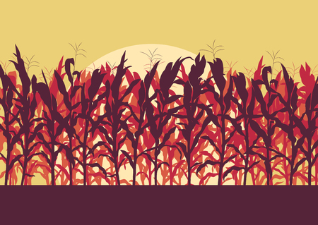 grain fields: Corn field evening or morning light landscape vector background