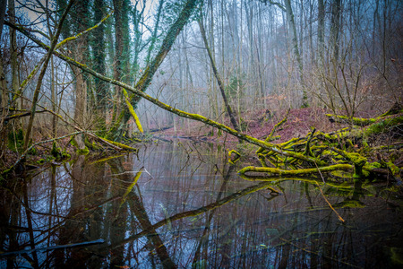 wasser: Cloudy green Forrest in the morning