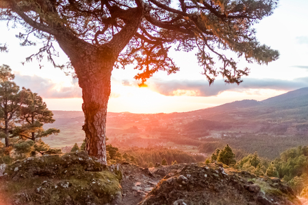 Sunrise or sunset in La Palma, Canary Islands with a fiery glow behind the mountains viewed from a rocky peak across the valley with an old evergreen tree