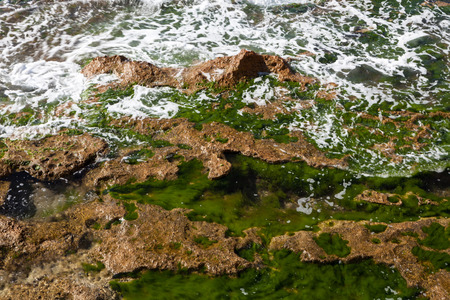 Seashore with light brown rough rocks emerald green algae and waves photo
