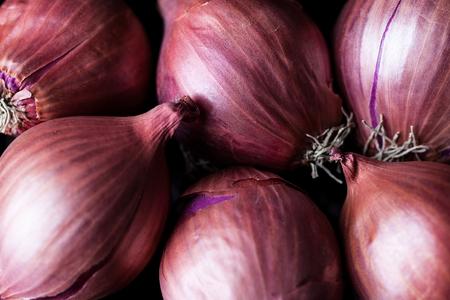 cebolla roja: Cebolla chalota densos con fondo shell Foto de archivo