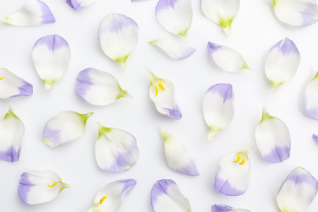 scattered on white background: Floral background white and purple flower petals on white background from above