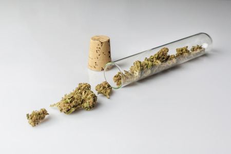 scattered on white background: Medical cannabis buds in spilled and scattered from glass test tube with cork on white background from side