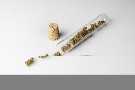 scattered on white background: Medical cannabis buds in spilled and scattered from glass test tube with cork on white background from high angle