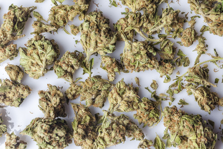 scattered on white background: Medical cannabis buds scattered on white background directly from above