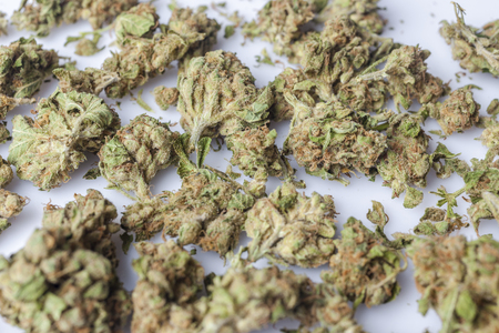scattered on white background: Medical cannabis buds scattered on white background from side closeup
