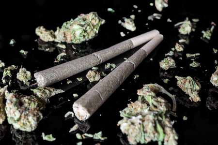 Two medical cannabis rolled joints with dried marijuana buds around on black background from side high angle