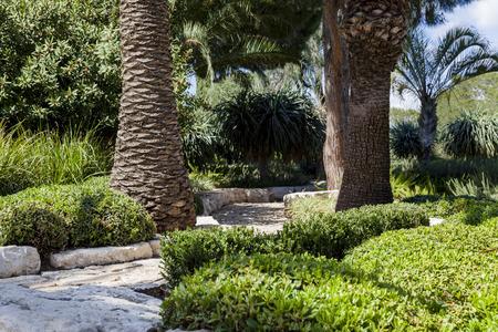 empedrado: Empedrado paso entre dos palmeras en el parque