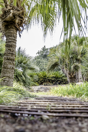 Passage in the lush green tropical garden with grass trees and bushes from ground low angle Banco de Imagens
