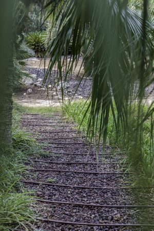 Passage in the lush green tropical garden with grass trees and bushes gravel and irrigation pipes