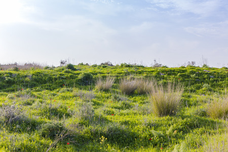 Wild green and dry grass hill with flowers red poppies dazzling sunlight and blue sky Stock Photo