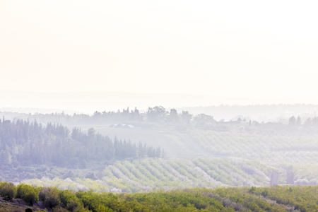 Cultivated fresh lush vegetation picturesque grove and empty field with greenhouse among hills with trees covered by haze