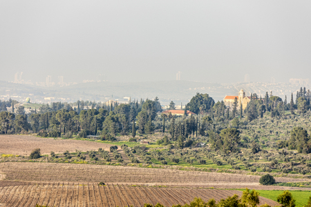 Rows of dry bare wood vineyard at winter and lush green grove with monastery on hill at Neve Shalom Latrun Banco de Imagens