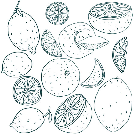 lemon lime: Vector set with lemon, lime, orange, tangerine, grapefruit. Bright illustration of juicy citrus fruits. eps 10. Illustration can be used for wallpaper, web page background, surface textures. Stock Photo