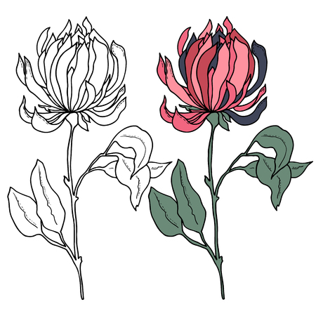 peony black: beautiful monochrome black and white peony flower isolated on white background. Hand-drawn contour lines and strokes. Illustration