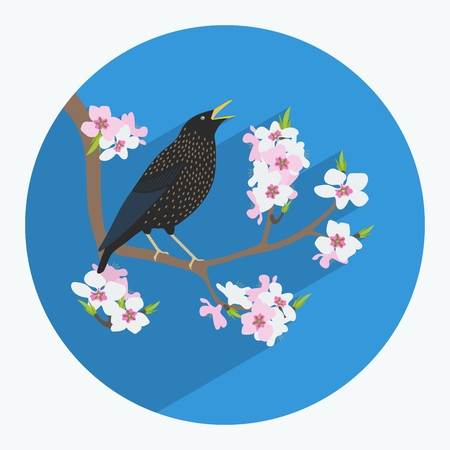 starling: illustration of a bird made in flat style. Starling on a branch. Cherry blossoms. Icon or postcard. Illustration