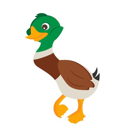 wattle: Cartoon duck drake Vector Illustration. Isolated duck on white background Illustration