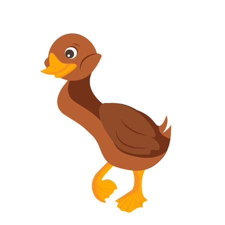 wattle: Cartoon duck. Vector Illustration. Isolated duck on white background
