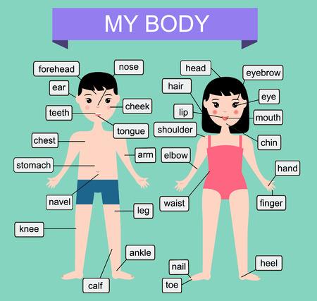 Mon corps. Apprendre parties du corps humain. Éducation illustration de vecteur pour les enfants avec garçon et une fille. infographies enfants Vecteurs