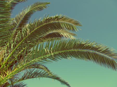 Palm leaves vintage toned photo. Tropical background