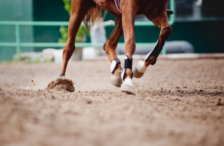 caballos corriendo: campo de caballo y jinete en una carrera
