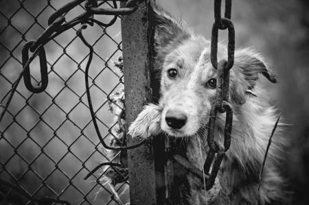 Sad sucia del perro blanco y negro en la valla Foto de archivo