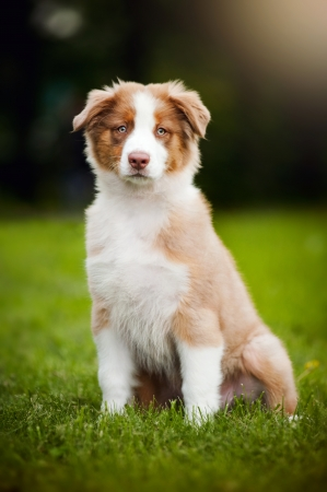 cute funny little puppy sitting on the grass