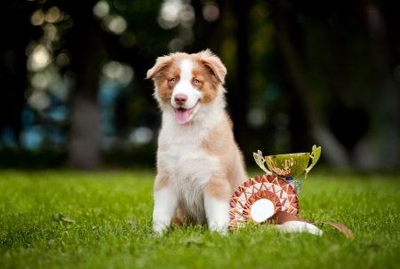 little puppy and his award cup on the grass Standard-Bild