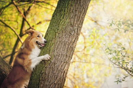 happy dog border collie portrait at the tree in summer