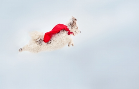 funny curly  hero dog wearing the red cloak flying in the sky