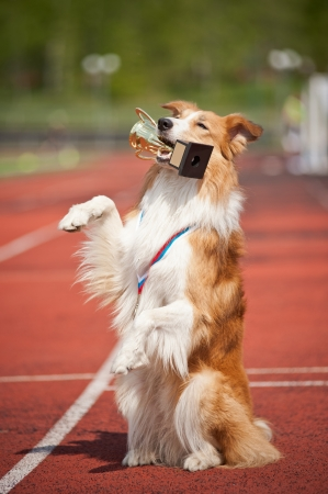 gold medal: border collie dog with medal and award make show trick