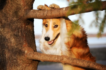 funny border collie dog puts its paws on a tree Stock Photo