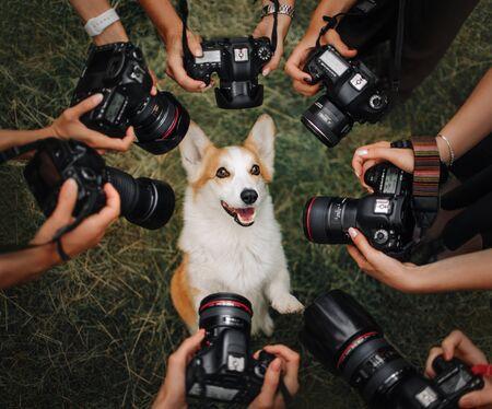 Welsh Corgi Pembroke dog posing for many cameras