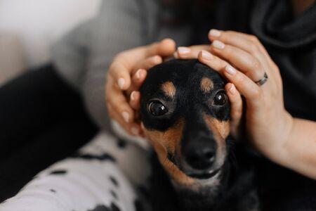 Kleiner Hund wird von zwei Menschen am Kopf gestreichelt