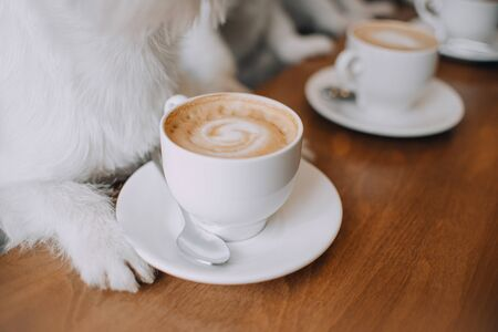 Cup of cappuccino coffee is on the table between the dog's paws Stock fotó - 135478681