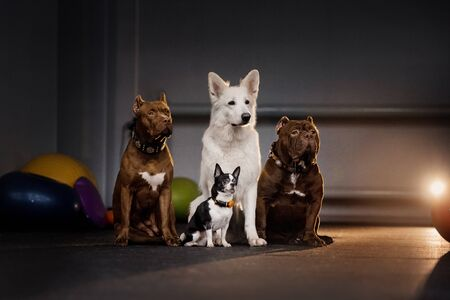 group of different breed dogs posing together indoors Stock fotó - 135478687