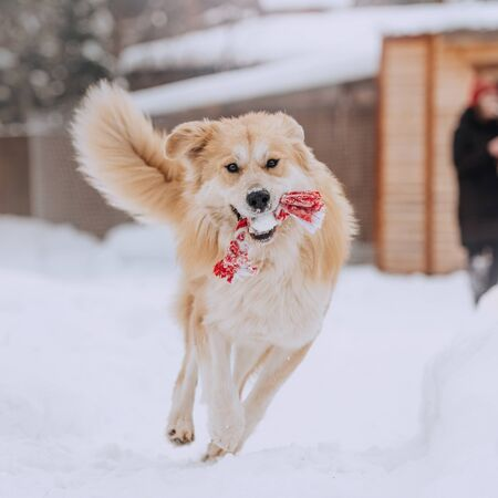 mixed breed dog running outdoors in winter