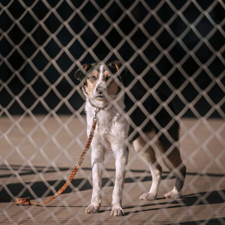 mixed breed shelter dog waiting for adoption behind the fence