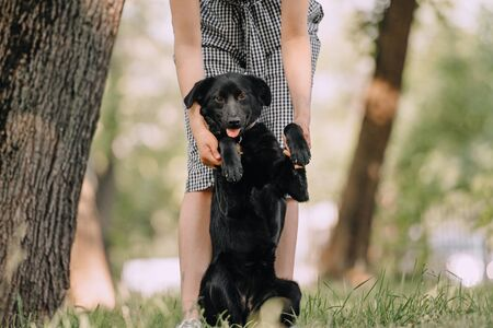 adorable black mixed breed dog posing outdoors in summer