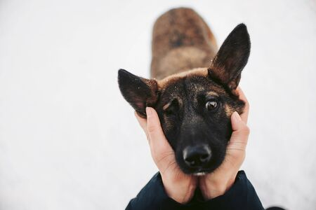 Einäugiger Mischlingshund, der mit menschlichen Händen posiert, die ihren Kopf halten Standard-Bild