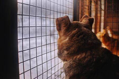 chien de refuge à la recherche de la cage en attente d'adoption Banque d'images