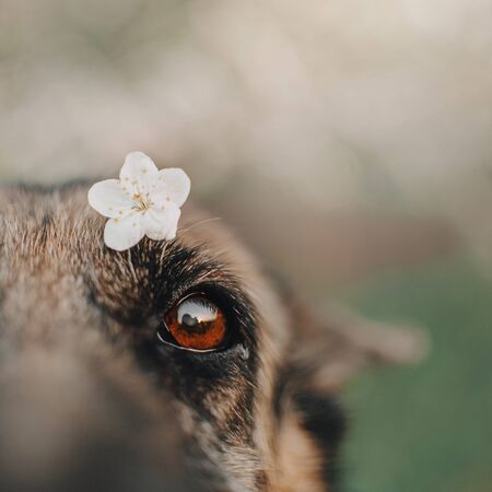 close up of a dog eye and little flower outdoors Stock fotó