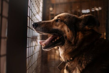 old dog portrait in an animal shelter cage