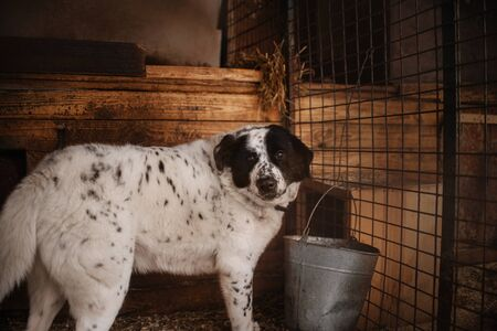 large mixed breed dog standing in a shelter cage