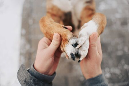 female hands holding dog paws lovingly outdoors