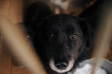 two sad black dogs portrait in an animal shelter behind bars